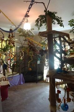 Bird Room Ideas Are Addictive. You Have Been Warned! - Spiffy Pet Products - DIY pet bird room design ideas to keep your pet parrot entertained and out of trouble. Parrot Pet, Parrot Toys, Parrot Bird, Animal Room, Funny Bird, Diy Bird Toys, Pet Bird Cage, Design Tisch, Bird Aviary