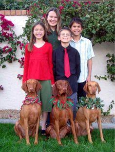 Vizsla-  raças de cachorros para crianças