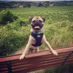 Retromops Ludwig Ludwig, French Bulldog, Dogs, Animals, Pet Dogs, Animales, Animaux, French Bulldog Shedding, Bulldog Frances