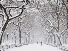 Snow covered trees and benches in Central Park, New York City, New York State, United States of America, North America Snow 1920 x 1080 pixels desktop wallpapers Winter Snow, Winter White, Winter Walk, Central Park, Snow Covered Trees, Park Pictures, Park Photos, Journey, Snow Scenes