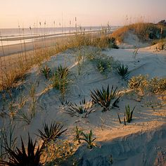 Sea Camp Beach - Cumberland Island, Georgia  Part of an 18-mile stretch of sand on the island's Atlantic side, Sea Camp Beach is wide and wild, strewn with driftwood and a gazillion shells and backed by sea grass and rolling dunes.