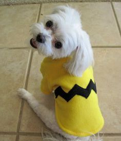 Halloween is coming up and we wouldn't want our furry friends to feel out of place while everyone else is all dressed up! Here are some easy and CHEAP costumes for your pets!