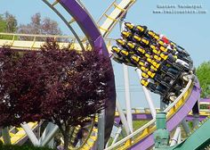 Vortex (stand up coaster).  California's Great America - Attractions in Silicon Valley