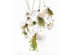 This living chandelier features blown glass bulbs designed to accommodate the in and out flow of hot and cool air to create comfortable temperatures for the plants. Each large orb can host 2 or 3 lights and plant life, with smaller orbs hanging for more greenery.  Design and Photo Credit: Omer Arbel