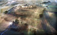 #nature #trees #fog