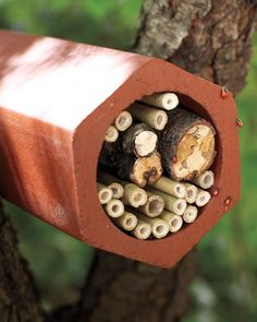 Invite ladybugs into your garden by building a habitat, using a length of pipe and scrap wood.