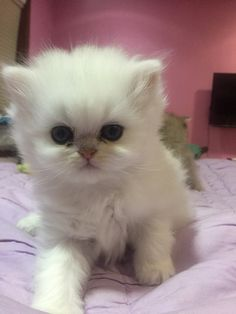 Cute Overload : My kitten just opened his eyes!