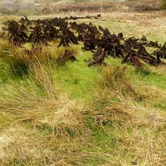 Turf (peat) on a local bog which has been 'footed' and is almost dry enough to be taken away. Vineyard, Ireland, Photos, Outdoor, Instagram, Outdoors, Pictures, Irish, Outdoor Games