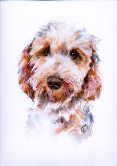 Pet portrait of a Cockerpoo painted by artist Jane Davies