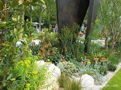Schinus molle, Dianella revoluta 'Little Rev', Digitalis canariensis, Ridolfia segetum, Libertia peregrinans 'Gold Leaf', Euphorbia, and Sporobolus heterolepis, pictured in The Telegraph Garden, at The RHS Chelsea Flower Show 2016.