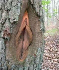 Tress can be a little freaky! | For Shits And Giggles mother nature's humor