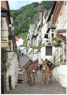 Clovelly, North Devon, England. They use the donkeys to carry luggage and supplies down into the village.