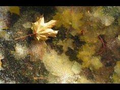 Diana Krall - Autumn Leaves