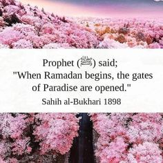Eid Collection, Daily Reminder, Ramadan, Paradise, Sayings, Lyrics, Quotations, Idioms, Quote