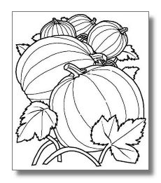 Pumpkin Coloring Sheet For Your Afternoon Patch Days Klscents