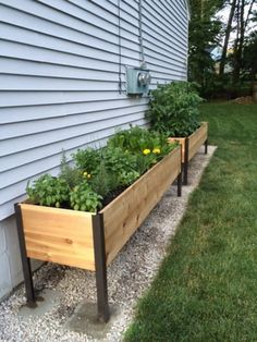 Gardener's Supply designed this cedar raised garden planter box generously deep so you can grow big plants like tomatoes and root crops like carrots.