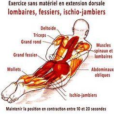 """Exercice pour le dos sans matériel et programme de 20 jours. L'exercice pour le dos appelé en yoga """"posture de la sauterelle"""" est un exercice d'extension qui tonifie dans la même action les muscles dorsaux, lombaires, fessiers et ischio-jambiers."""
