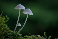 6 Tips for Near-Macro Photography with a Telephoto Lens