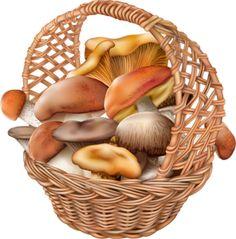 mushrooms in a wicker basket.png