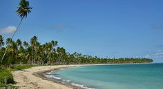 Miniguia de praias: São Miguel dos Milagres, Porto de Pedras, Japaratinga e Maragogi | Ricardo Freire | Viaje na Viagem