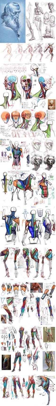 Anatomy Sketches, Anatomy Drawing, Anatomy Art, Human Anatomy, Body Anatomy, Figure Drawing Reference, Anatomy Reference, Drawing Skills, Drawing Techniques