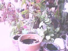 plantas \ patio\ jardim