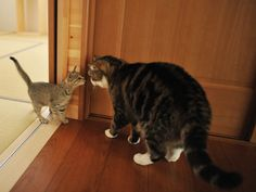 Maru follows his new sister