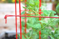 Our Tall Expandable Pea Trellis is now available in red and green in addition to steel gray.