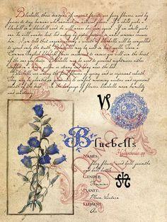 Bluebells        Show next photo
