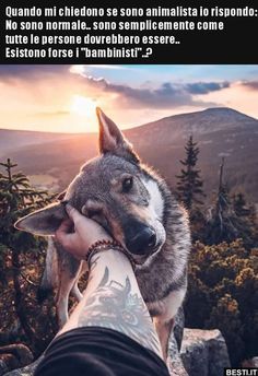 20 spectacular images in which nature frames the face of a beautiful wolf dog - beauty places beach - Chien Funny Pictures Tumblr, Funny Animal Photos, Funny Photos, Animals Photos, Animals And Pets, Funny Animals, Cute Animals, Beautiful Wolves, Animals Beautiful