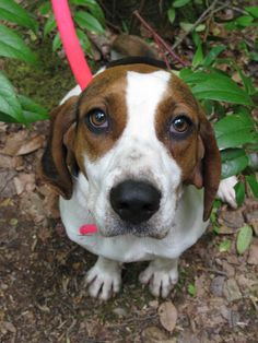 Best Dog Food For Coonhounds