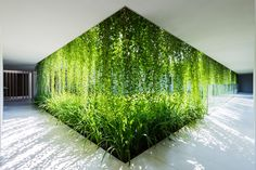 Restaurant Plant Walls : Plant Wall