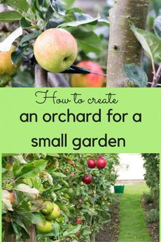 Urban Garden Design An orchard in the garden? You really do have the space! - How to fit an orchard in the garden - grow cordon apples for a big harvest, however tiny your garden. Grow fruit trees successfully in any back yard. Fruit Garden, Garden Trees, Harvest Garden, Planting Fruit Trees, Espalier Fruit Trees, Veggie Gardens, Farm Gardens, Edible Garden, Planting Seeds