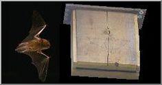 Construire un nichoir à chauves-souris. Plans Dimensions Conseils Construction, Vignettes, Plans, Dimensions, Nature, Diy, Painting, Orientation, Roses