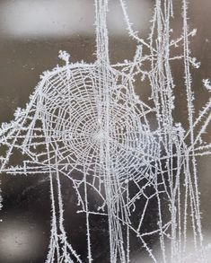 Spiderweb in Snow
