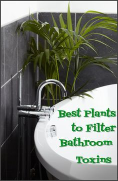 best plants to filter bathroom toxins