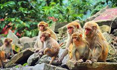 Voorbeeldreis Sri Lanka: Classic Tour - Exploring The Pearl | Evaneos