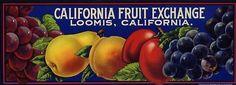 CALIFORNIA FRUIT EXCHANGE CRATE LABEL
