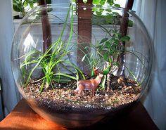 Idee per un terrario