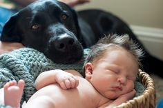 Newborn with Dog from Echo Media Photography featured on the MPIX blog