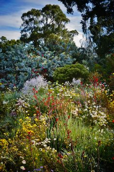 Cottage garden design with Australian native plants - my garden aspiration Meadow Garden, Dry Garden, Garden Shrubs, Garden Cottage, Australian Wildflowers, Australian Native Flowers, Australian Plants, Australian Garden Design, Australian Native Garden