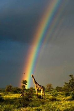 Everytime I see a rainbow it reminds me of the Lord's promise to never again destroy the entire earth with water.