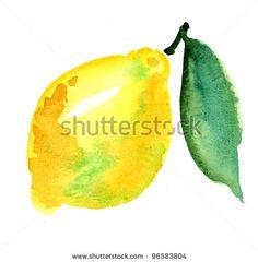 watercolour hand iluustration of lemon fruit