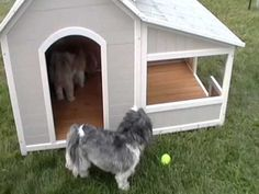 Precision Outback Savannah Dog House Review - YouTube