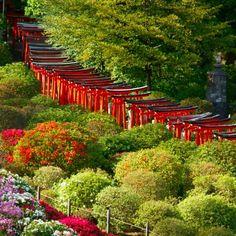 お参りするごとに表情を変える?季節の移ろいも感じさせてくれる根津神社。1年を通じてお参りしたくなる素敵な神社をご紹介します。