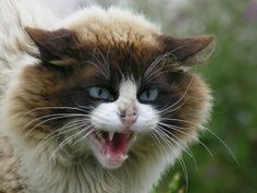 myhopeconnect - Why a Cat Bite Could Land You in The Hospital Surprising Results From New Study.2 24 2014
