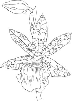 zygopetalum helen ku orchid coloring page from orchid category select from 24848 printable crafts of