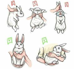 How to pick up a bunny.