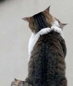 Kitty Hug; I'll take two, please! (04.17.15)