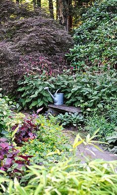 A weathered stone bench just off the beaten path of this shade garden is a welcome surprise to anyone who ventures by.